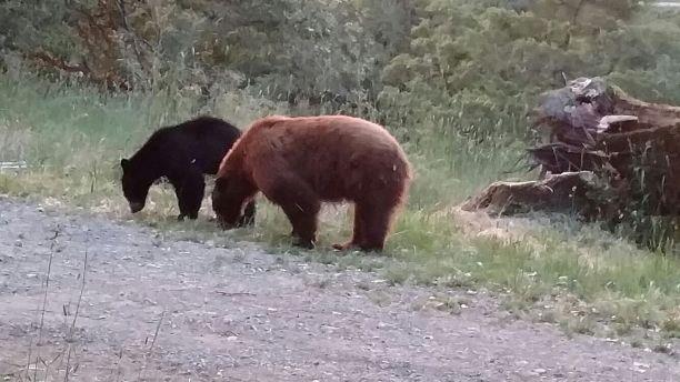 6:4:16_ bears_downranch